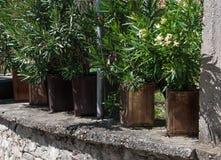 Kwiatów garnki stoi na drylują ogrodzenie zdjęcie royalty free