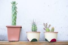 Kwiatów garnki z kaktusem obraz stock