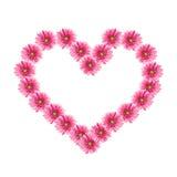 kwiatów gerbera serca menchie obraz stock