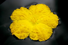kwiatów gurdy gąbka Obrazy Stock