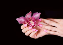kwiatów gwoździe zdjęcia stock