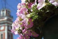 Kwiatów i Nevsky perspektywy sylwetka Obrazy Royalty Free