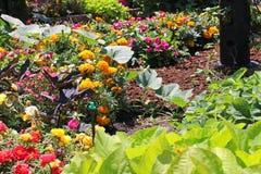 Kwiatów i warzyw ogród Obrazy Stock