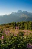 kwiatów ilustraci krajobrazu gór wektor Zdjęcie Stock