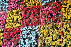kwiatów Italy Tuscany ściana zdjęcia royalty free