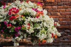 kwiatów Italy Tuscany ściana obrazy stock