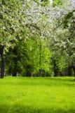 kwiatów jabłczani drzewa Fotografia Royalty Free