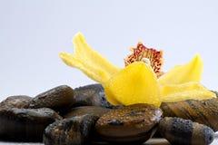 kwiatów kamieni terapia Zdjęcie Stock