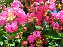 Kwiatów kolory zdjęcie royalty free