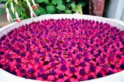 Kwiatów kolory Obraz Stock