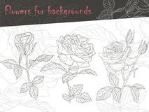 Kwiatów kontury dla tła (ręka rysująca, wektor,) Obraz Stock