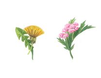 kwiatów kwiaty Fotografia Stock