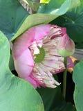 Kwiatów kwitnąć Fotografia Stock
