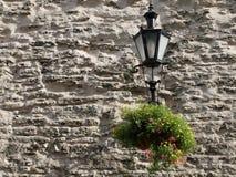 kwiatów lampy ściana Obraz Stock