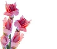 kwiatów lasu deszcz tropikalny Obraz Royalty Free