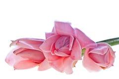 kwiatów lasu deszcz tropikalny Zdjęcie Royalty Free