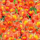 kwiatów lelui pomarańcze wzór bezszwowy Fotografia Stock