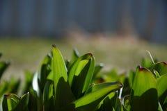 Kwiatów liście Zdjęcie Stock