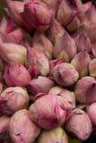 kwiatów lotosu menchie nieotwarte Obrazy Royalty Free