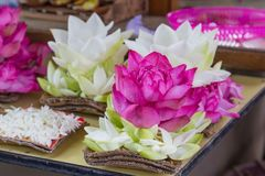 kwiatów lotosu menchii biel Zdjęcie Royalty Free