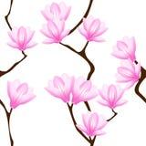 kwiatów magnolii wzór bezszwowy Fotografia Stock