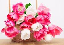 Kwiatów, menchii i bielu tulipany w koszu, biel odizolowywający Fotografia Royalty Free