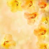 kwiatów obrazka różanecznika rocznik Fotografia Royalty Free