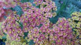 Kwiatów ogródy obraz stock