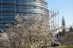 Kwiatów ogródy wokoło parlamentu europejskiego w Strasburg Obrazy Stock