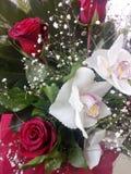 kwiatów orhids odoru piękno fotografia royalty free