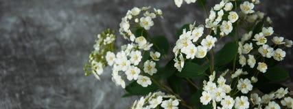 Kwiatów pączków płatki w rozrzucaniu na szarym abstrakcjonistycznym tle Szara ponuractwo cementu podłoga Bia?y kwiat obraz stock