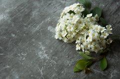 Kwiatów pączków płatki w rozrzucaniu na szarym abstrakcjonistycznym tle Szara ponuractwo cementu podłoga Bia?y kwiat zdjęcie stock