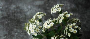 Kwiatów pączków płatki w rozrzucaniu na szarym abstrakcjonistycznym tle Szara ponuractwo cementu podłoga Bia?y kwiat obraz royalty free