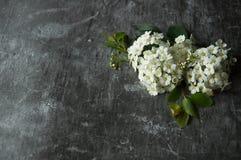 Kwiatów pączków płatki w rozrzucaniu na szarym abstrakcjonistycznym tle Szara ponuractwo cementu podłoga Bia?y kwiat obrazy royalty free