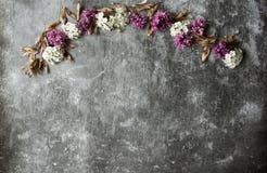 Kwiatów pączków płatki w rozrzucaniu na szarym abstrakcjonistycznym tle Szara ponuractwo cementu podłoga Purpur i bielu kwiat zdjęcia royalty free