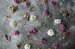 Kwiatów pączków płatki w rozrzucaniu na szarym abstrakcjonistycznym tle Szara ponuractwo cementu podłoga Purpur i bielu kwiat zdjęcie stock