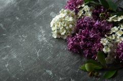 Kwiatów pączków płatki w rozrzucaniu na szarym abstrakcjonistycznym tle Szara ponuractwo cementu podłoga Purpur i bielu kwiat zdjęcia stock