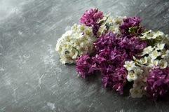 Kwiatów pączków płatki w rozrzucaniu na szarym abstrakcjonistycznym tle Szara ponuractwo cementu podłoga Purpur i bielu kwiat fotografia stock