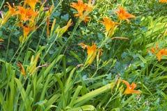 Kwiatów pączki na tle roślinność obraz stock