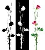 Kwiatów pączki róże odizolowywać Fotografia Stock