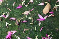 Kwiatów płatków spadek na ziemi Tło i tekstura Zdjęcia Stock