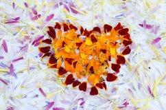 Kwiatów płatki obrazy royalty free