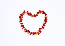 Kwiatów płatki zdjęcie stock