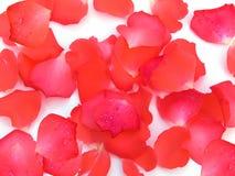 kwiatów płatki wzrastali Zdjęcia Royalty Free