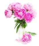 kwiatów peoni menchie Zdjęcia Stock