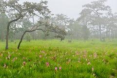 Kwiatów pola Zdjęcia Stock