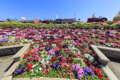 Kwiatów pola Fotografia Stock