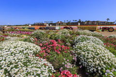 Kwiatów pola Obraz Royalty Free