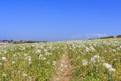 Kwiatów pola Obraz Stock