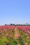 Kwiatów pola Obrazy Royalty Free